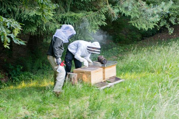 Kontrolle der Bienenvölker in Dadantbeuten