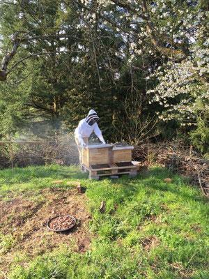 Tim mit Imkeranzug und Smoker an zwei Bienenvölkern