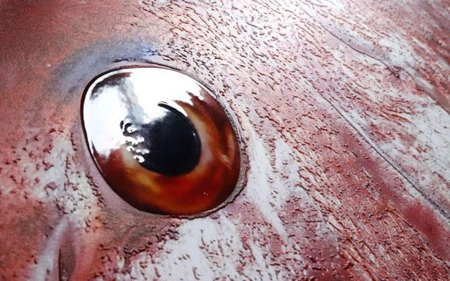 真鯛の目に、光が反射し、本物のような潤い。