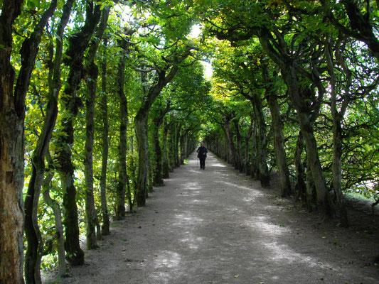 Eremitage Bayreuth – Laubengang