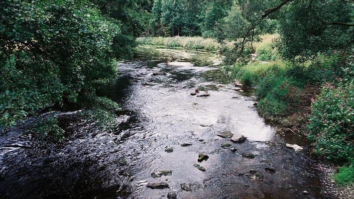 Zugewachsene Ufer der Saale