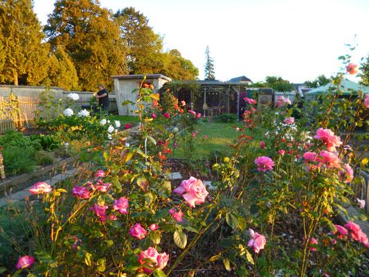 Unsere Kleingartenparzelle