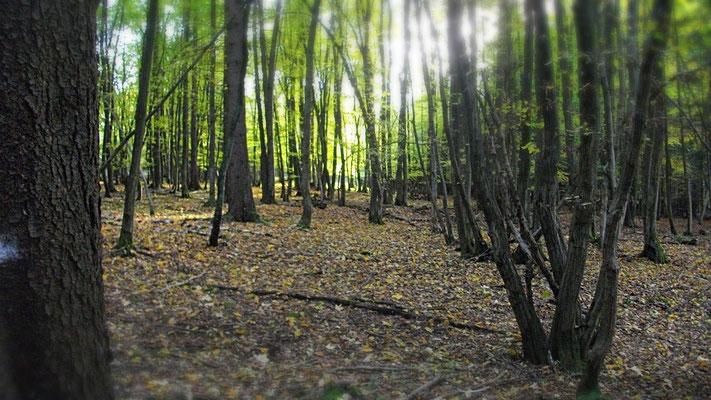 Das Waldstück auf der Höhe zwischen Alladorf und Kleinhül