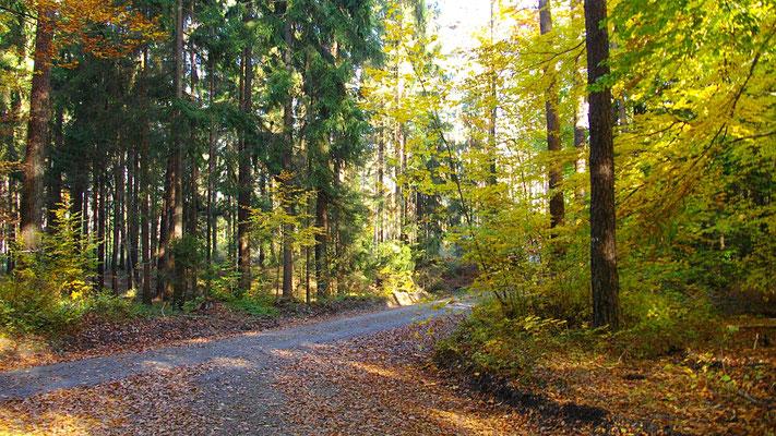 Durch den Limmersdorfer Forst