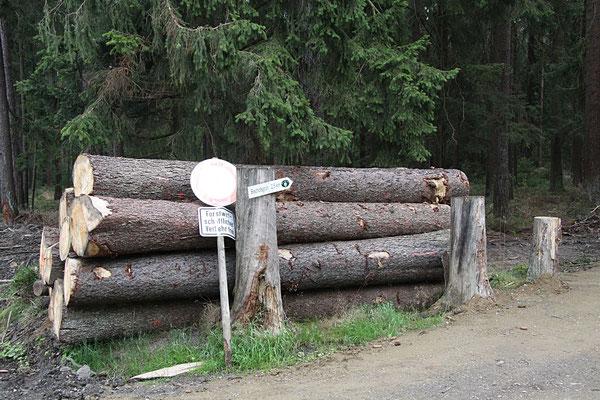 Forstwirtschaft im Bischofsgrüner Forst