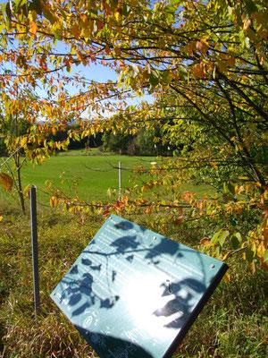 Auf dem Jean-Paul-Weg auf dem Rodersberg – Stationstafel 107 »Science Fiction - im Jahre 10 000 (Teil 3)«