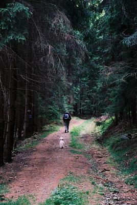 Auf dem Weg zum Großen Waldstein