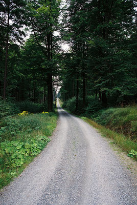 Auf dem Jean-Paul-Weg – Forst-Folter-Wege