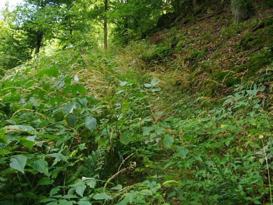 Zugewachsener Jean-Paul-Weg oberhalb von Bad Berneck