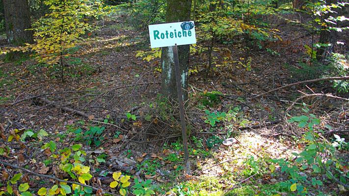 Der Baumlehrpfad im Limmersdorfer Forst
