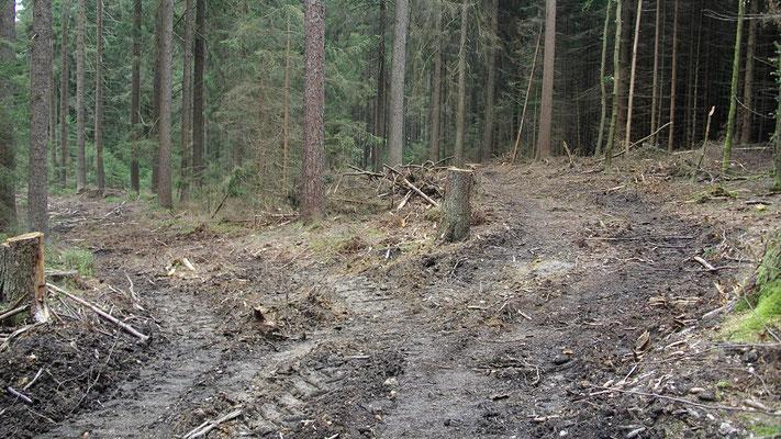 Spuren von Rodungsarbeiten im Bischofsgrüner Forst