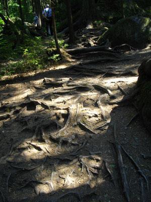 Im Felsenlabyrinth