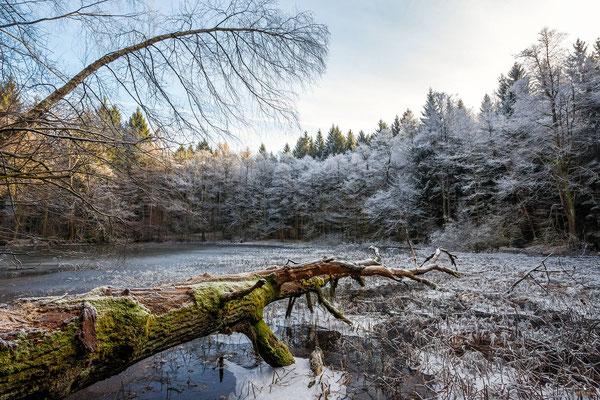 Winter am Buschmühlenteich bei Gelenau