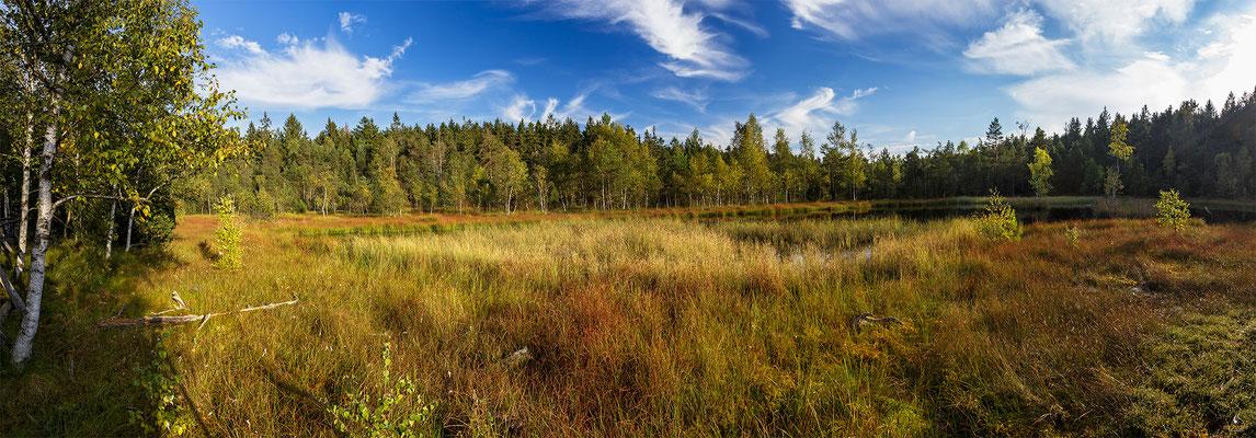 Herbstanfang beim Hormersdorfer Hochmoor
