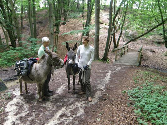 Der Weg durch die Dalbekschlucht zwischen Wentorf und Escheburg ist recht steil