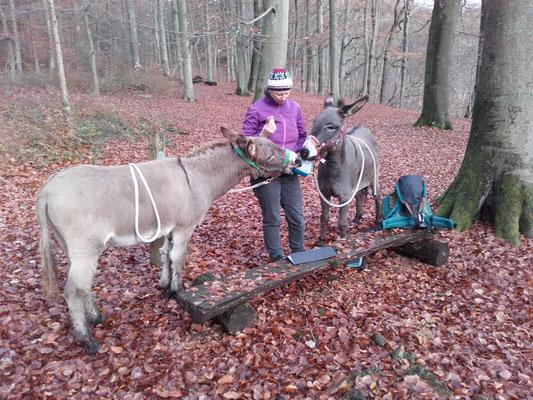 Winterliche Wanderung im Sachsenwald