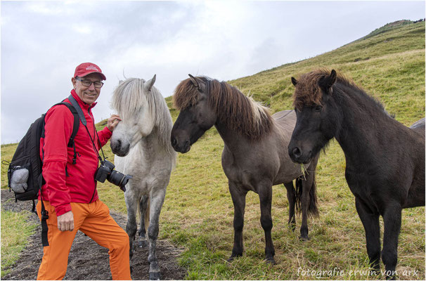 Die lieben Pferde von Velbastadur