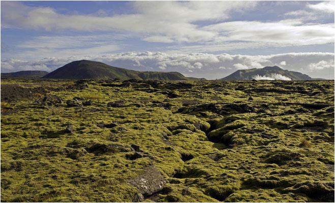 Island, Lavastein mit Moss bewachsen