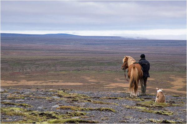 Er hält Ausschau nach Schafen die von den Highlands ins Tal getrieben werden