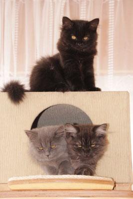 Manni, Merlin und oben Mimi
