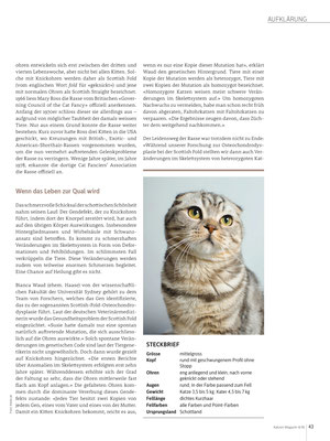 Regina Röttgen, Vom Leid geknickt -Scottish Fold, Katzenmagazin 08/09/2018, CH