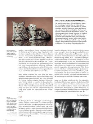 Regina Röttgen, Vom Leid geknickt- Scottish Fold, Katzenmagazin 08/09/2018, CH