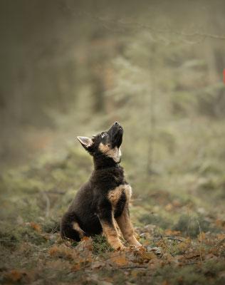 puppyfotografie, hondenfotografie, fotograaf Hardenberg, hondenfotografie overijssel