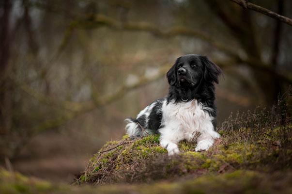 hondenfotografie, hondenportret, fotograaf Hardenberg, fotograaf Overijssel