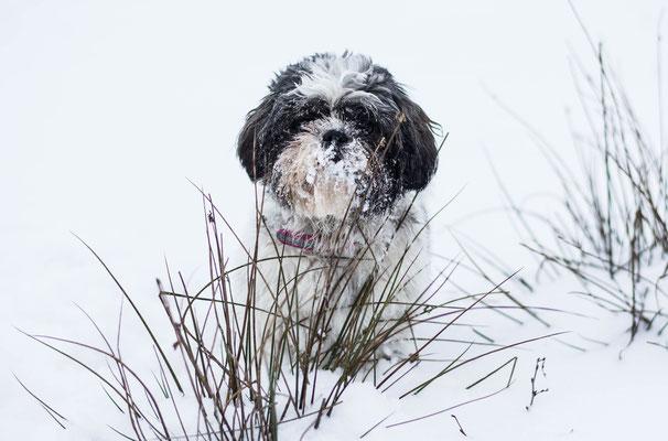 Hondenfotografie Hardenberg, fotograaf Hardenberg
