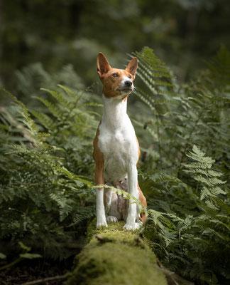 hondenfotograaf Overijssel, fotograaf Hardenberg