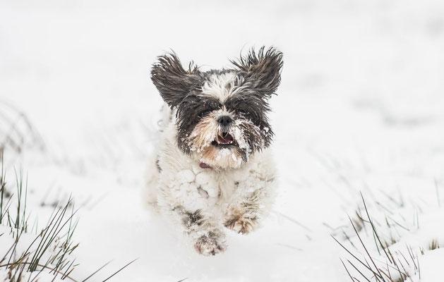 hondenfotografie, fotograaf Hardenberg