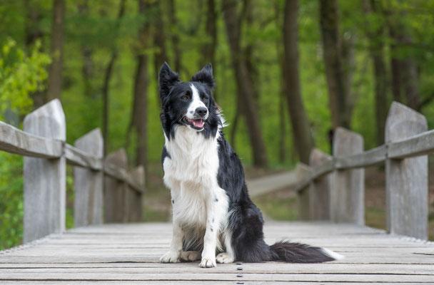 Hondenfotografie Hardenberg