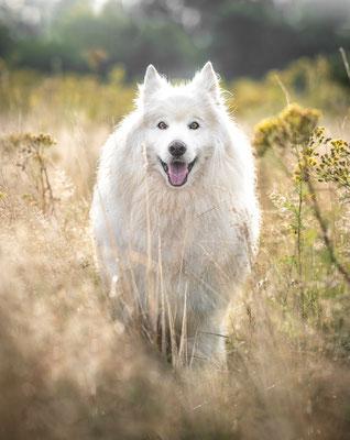 fotograaf hardenberg, hondenfotograaf Overijssel