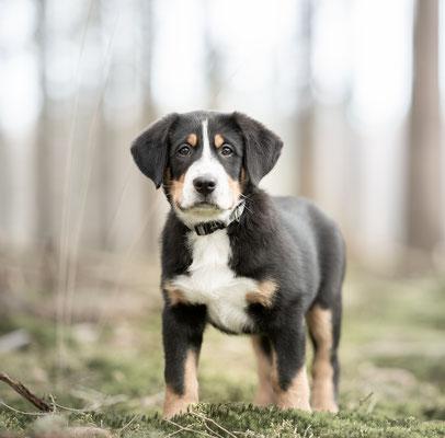 puppyfotografie, hondenfotografie Hardenberg