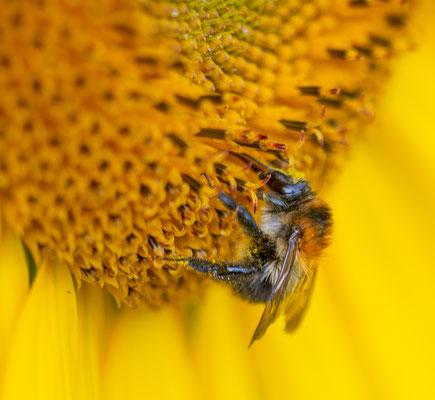 fotograaf Hardenberg, natuur