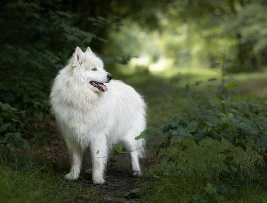 Hondenfotografie Overijssel, fotograaf Hardenberg