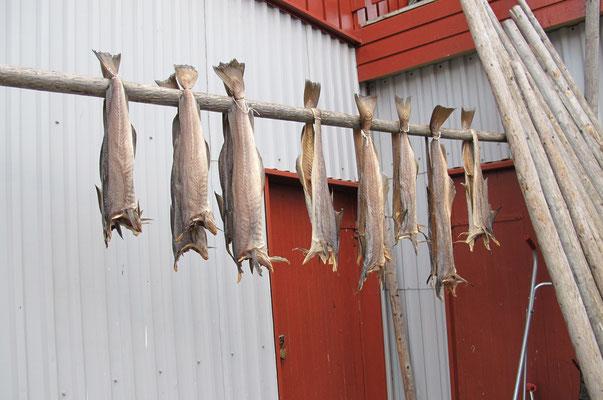 Stockfisch gibt es buchstäblich an jeder Ecke...