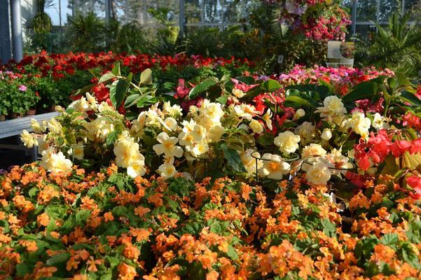 Sommerblumen für Balkon und Terrasse