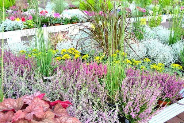 Beet- und Balkonpflanzen im Herbst