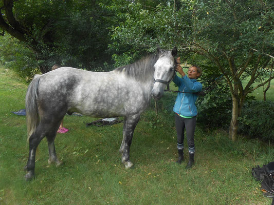 Accueil cavaliers et chevaux, Moulin du Bateau.