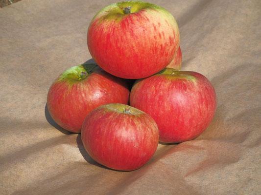Einer unserer ältesten Partner: Feltens aus Meckenheim, die z.B. Äpfel erzeugen. Siehe: https://www.obstbau-felten.de/