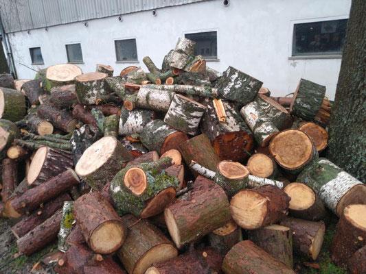 Brennholz im Überfluss