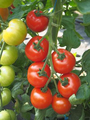 Beispielsweise unsere Tomaten wachsen in unseren Gewächshäusern auf der Hoffläche und haben 0m motorisiert zurückgelegt bevor sie auf der Ladentheke liegen (dafür ca. 150m per Schubkarre ;) )