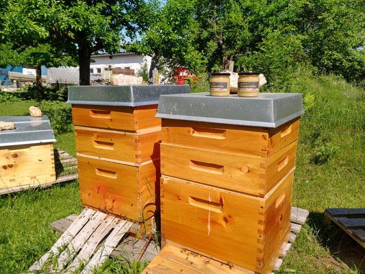 Einige Bienenstöcke der Hofbienen:)