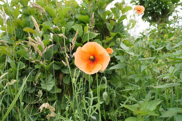 Auch die Flora ist sehr schön in Herford.