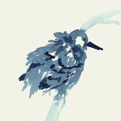 Vogel. Projekt Tiere im Schwarzwald.