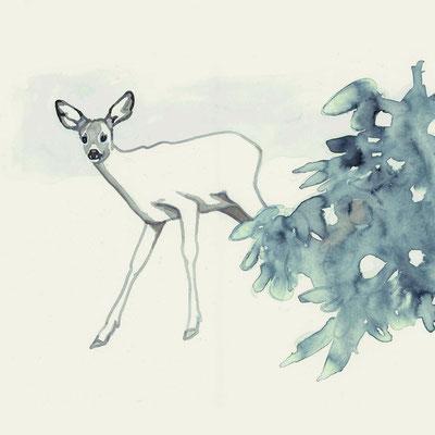 Reh. Projekt Tiere im Schwarzwald.