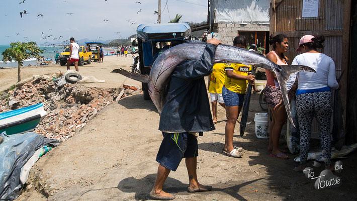 El Matal - der Schwertfisch wiegt mehr als 20kg