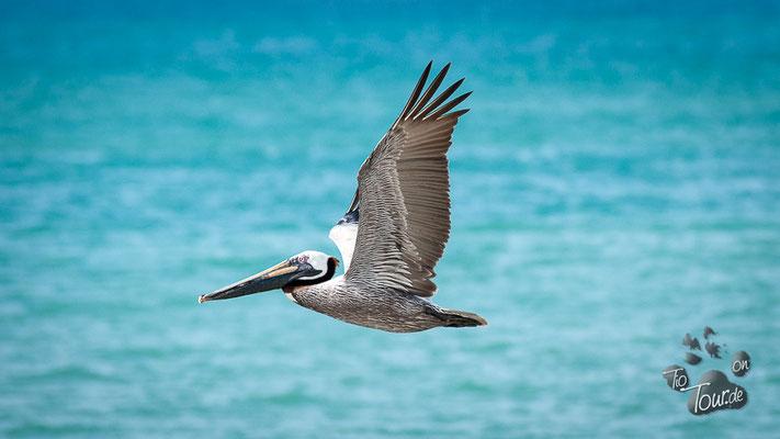 Playa Machalilla - auf der Suche