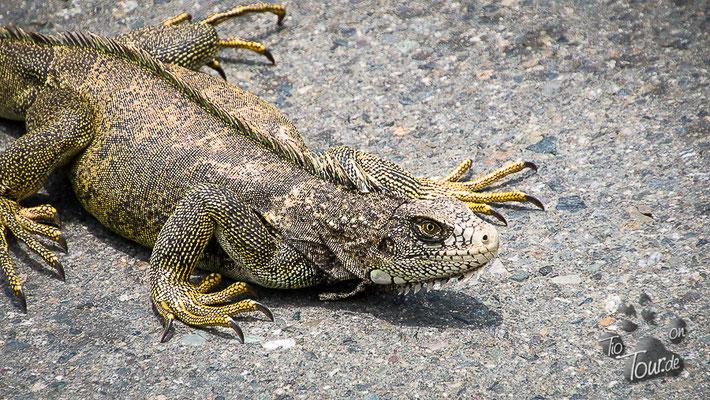 Nationalpark Podocarpus - nur eine Vollbremsung konnte sie retten ;-)